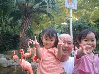 05-0923_flamingo.jpg
