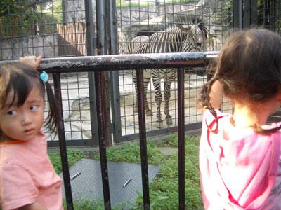 05-0923_zebra.jpg